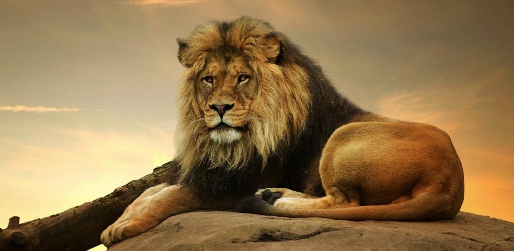 kikoy_tours_safari_kenya_tanzania