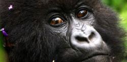 kikoy_tours_gorilasenlaniebla