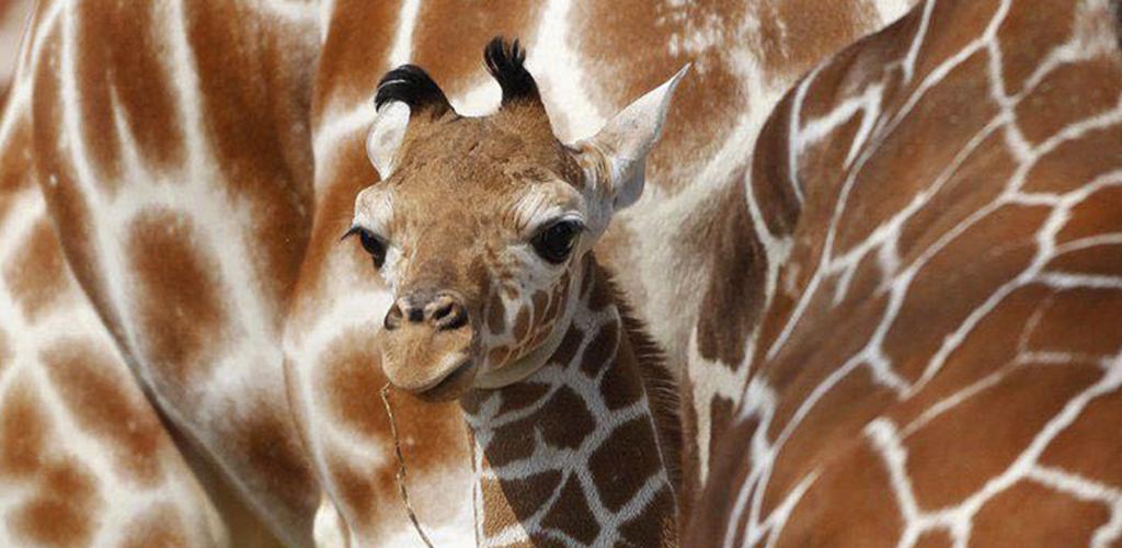 kikoy_tours_safari_kenya_zanzibar