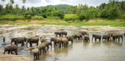 Sri Lanka en 10 Días