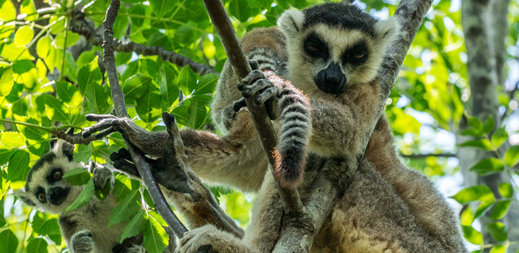 Descubriendo Madagascar